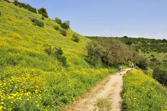 Hiking in Galilee, Israel. Stock Images