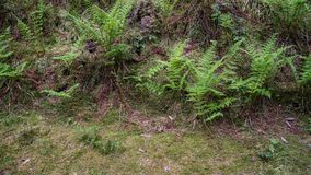 Fern growing at meadow side stock images