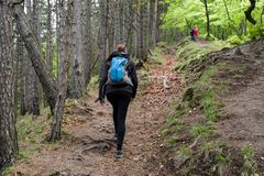 Hiking girl in forest. Hiking woman in forest. green trees at background stock image
