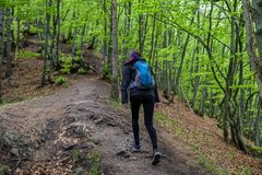 Hiking girl in forest. Hiking woman in forest. green trees at background royalty free stock photos