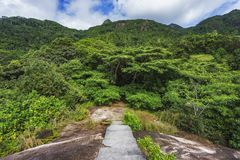 Hiking the granite stairway in the jungle, mahé, seychelles. Hiking a granite stairway to the top of a hill in the jungle in the mountains on mahé, seychelles Royalty Free Stock Images