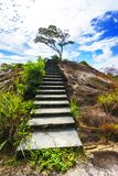 Hiking the granite stairway in the jungle, mahé, seychelles 2. Hiking a granite stairway to the top of a hill in the jungle in the mountains on mahé Stock Photos