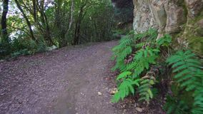 Hiking in the forest stock video footage