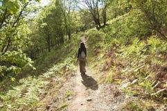 Hiking at green nature Royalty Free Stock Photography