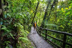 Hike in Costa Rica Stock Images