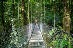 Hike in Costa Rica. Hiking in green tropical jungle, Costa Rica, Central America stock image