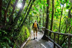 Hike in Costa Rica Stock Image