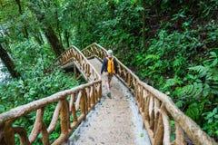 Hike in Costa Rica. Hiking in green tropical jungle, Costa Rica, Central America stock photo