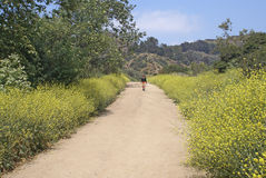Hiking Griffith Park. Lone female hiker on wildflower bordered trail with mountains and trees in background. Lush spring vegetation in Griffith Park, Los Angeles Royalty Free Stock Images