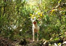 Hiking at Gualba (Montseny) Stock Photos