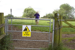 Hiking Hazard, Bull in Field Stock Image