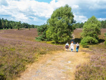 Hiking in the heathland Royalty Free Stock Image