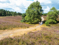 Hiking in the heathland Royalty Free Stock Photography
