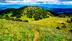Hiking through the high Alpine Meadows covered in wild flowers to the top of Tod Mountain Royalty Free Stock Photos