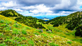 Hiking through the high Alpine Meadows with many wild flowers Royalty Free Stock Photography