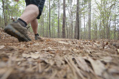 Hiking. A hiker walking a trail in spring stock images