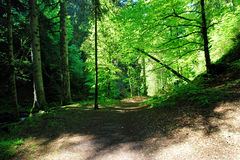 Hiking impressions in the Black Forest in Germany. Hiking through beautiful nature and landscape in the Black Forest in Germany royalty free stock photo
