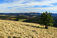 Hiking impressions in the Black Forest in Germany. Hiking through beautiful nature and landscape in the Black Forest in Germany Stock Photos