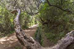 Hiking on the island of Madeira, Portugal Stock Photo