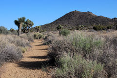 Hiking in Joshua Tree National Park Royalty Free Stock Image