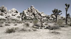 Hiking Joshua Tree National Park Stock Photo