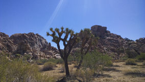 Hiking Joshua Tree National Park Stock Photos
