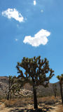 Hiking Joshua Tree National Park Royalty Free Stock Image