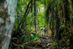 Hiking In the Jungle of the Corcovado. Two hikers make their way through the thick jungle of Corcovado National Park, Costa Rica royalty free stock photography