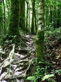 Hiking through the jungle, panama Royalty Free Stock Photo