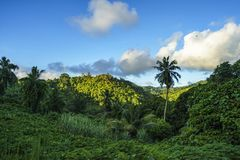 Hiking through the jungle, seychelles 1 stock images