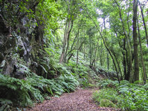 Hiking La Palma  Canary Islands Stock Image
