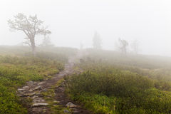 Hiking in Lapland Royalty Free Stock Photography