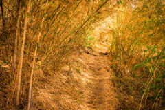 Hiking a long distance trail in bamboo forest Stock Photos