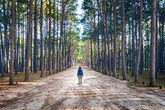 Hiking man with backpack walking in forest Royalty Free Stock Photos