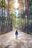 Hiking man with backpack walking in forest Stock Photos
