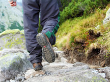 Hiking man legs. In mountains royalty free stock images