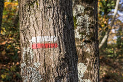 Hiking mark in forest `Good direction` Royalty Free Stock Photography