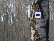 Hiking mark on a tree. A blue bar on white background on a birch at a hiking trail in the forest stock photo