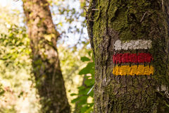 Hiking marks tree marking correct direction Royalty Free Stock Photo