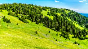 Hiking through the meadows covered in wildflowers in the high alpine near the village of Sun Peaks Royalty Free Stock Photography