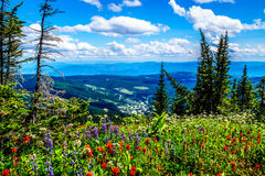 Hiking through the mountain alpine meadows with wild Flowers on Tod Mountain Stock Photo