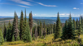 Hiking through Mountain Forests Royalty Free Stock Photography