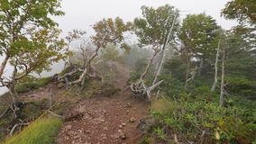 Mountain hike in mist and fog. Hiking in mountain mist inside clouds on a trail on top of Mount Nantai, Japan stock video footage