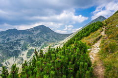 Hiking in the mountains in the summer Royalty Free Stock Photos