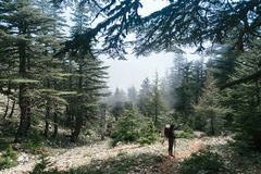 Hiking in the mountains. A woman stand near of green trees in mountains. The girl is resting. Hiking in the mountains. A woman stand near of green trees in Royalty Free Stock Image