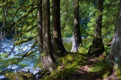 Hiking Mt. Hood National Forest Salmon River. Hiking bee the Salmon River in Mt. Hood National Forest where there is an abundance of shady tranquil landscapes Stock Photo
