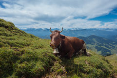 Hiking on the Nagelfluhkette in the German alps. On a sunday afternoon Royalty Free Stock Images