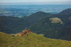 Hiking on the Nagelfluhkette in the German alps. On a sunday afternoon Royalty Free Stock Photography