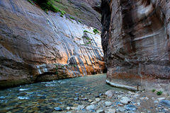 Hiking through the Narrows in Zion National Park. Utah with sunlight reflecting off the canyon walls Stock Images