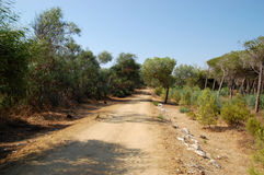 Hiking in a nature reserve of WWF. Off-road hiking in a nature reserve of WWF located in Sicily Stock Photos